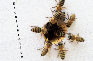 recalibration-the-hive